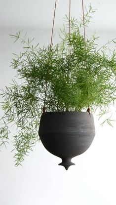 Home Decor Modern Planters and Plants