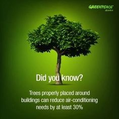 Et pourtant tellement évident ! Plant more trees! Every yard should have at least one tree. Cool facts - let's be more vigilant and plant more trees Earth 3, Save Planet Earth, Save Our Earth, Save The Planet, Green Earth, Save Mother Earth, Mother Nature, Angst Quotes, Garden Quotes