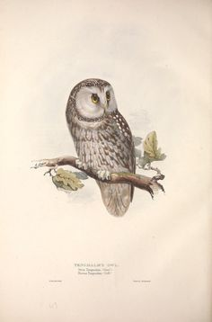 https://flic.kr/p/fjw9aF | n221_w1150 | The birds of Europe.. London,Printed by R. and J.E. Taylor, pub. by the author,1837.. biodiversitylibrary.org/page/42174435