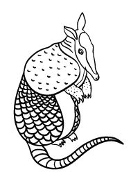 armadillo coloring printable texas unit pinterest