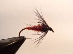 Irresistible Griffith's Gnat - On The Vise