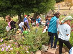 Green your schoolyard for Green Apple Day of Service and all year long   Center for Green Schools