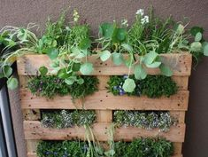 Container Herb Garden Design Ideas #MedicinalHerbGarden >> See more tips at http://wiselygreen.com/grow-your-own-herbal-medicine-in-an-indoor-garden/