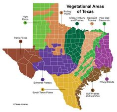 The types of plants found in Texas vary widely from one region to the next. This is due to the amount and frequency of rainfall, diversity of soils, and the number of frost-free days. From the forests of East Texas to the deserts of West Texas, from the grassy plains of North Texas to the semi-arid brushlands of South Texas, plant species change continuously.