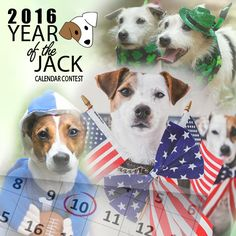 Enter your Terrier's photo into our Year of the Jack 2016 calendar photo contest! Win a coveted spot on the cover and/or month or just reserve a spot for spot. All proceeds go to Georgia Jack Russell Rescue, Adoption & Sanctuary. #jackrussell #calendar #photocontest