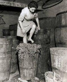La vendemmia, Frascati 1957