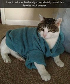 Attack Of The Funny Cats! – 38 Pics