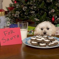 Christmas Home Safety Tips for Dog Owners | Dogster