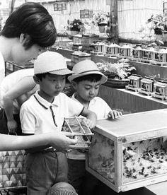 Children buying crickets, Matsuzakaya department store of Chuo-ku, Tokyo, 26 July 1966