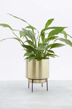 Großer Blumentopf Gold Pflanzen im Industrial Stil