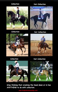 Dressage Training: How To Collect Your Horse - The Thinking Equestrian - http://www.successful-horse-training-and-care.com/dressage-training-how-to-collect-your-horse.html