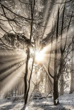 ~~Permission to Radiate | sun rays light up a forest in Winterberg, Germany | by Lars van de Goor~~