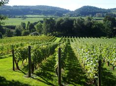 Coddington Vineyard, Coddington, Ledbury, Herefordshire