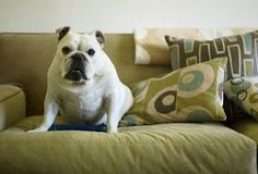 5 Tips and Tricks for Quickly Removing Pet Hair from furniture and clothes
