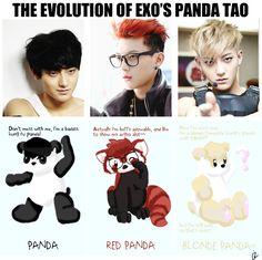 The Evolution of Exo's Panda Tao by a-cherry-pizza.deviantart.com on @deviantART