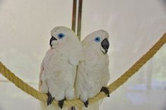 Tenerife Loro Parque Parrots  March 2015 Image 15