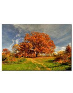 Lois Bryan 'Fall Scene II' Canvas Art...