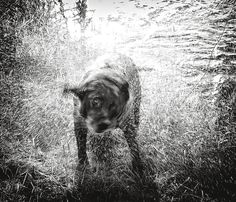 Shake Down by Hot Dog Photography Dog Love, Puppy Love, Best Shakes, Happy Animals, Dog Photography, Mans Best Friend, Hot Dogs, Weird, Puppies