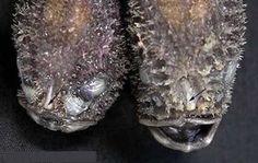 10 horribles criaturas del mar profundo (monstruos marinos, animales de mar, peces de mar) - ODDEE