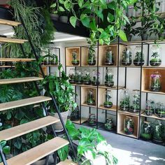 Room With Plants, House Plants Decor, Plant Decor, Plant Aesthetic, Aesthetic Rooms, Indoor Garden, Indoor Plants, Home And Garden, Decoration Plante
