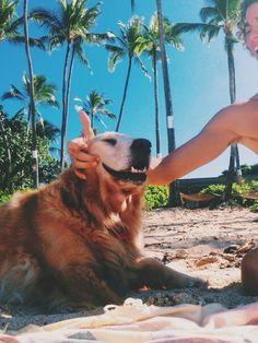 Happy Dog Summer Beach Summer Breeze Puppy Love I Love Dogs Beagle