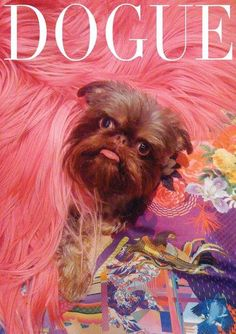Brussels Griffon on the cover of Dogue!