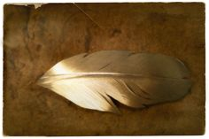Ptarmigan feather silver tie brooch - Jewellery made by Tytti Bräysy