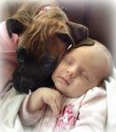 Boxer Ruby With Her Baby Sister :) Boxers Of Palo Mesa