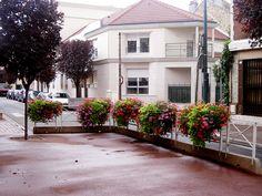 Pomysł na ukwiecenie: pelargonia w skrzynkach | Inspirowani Naturą I flower decor in boxes atech.pl-eu Flower Boxes, Flowers, Malaga, Cities, Gardening, French Chic, Planting, Boden, Window Boxes