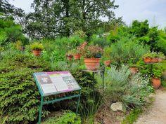 Parc Floral, Plants, Plant, Planets