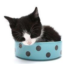 If I fits, I take a cat nap ❤️