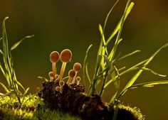 My name is Slava and I am a photographer. Mushrooms are my second passion after photography. I am an avid mushroom hunter. My passion for mushrooms, as well as photography, was inspired by my father.