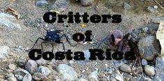 Arachnids and Insects in Costa Rica – Ants, Scorpions and Spiders Oh My! via @mytanfeet