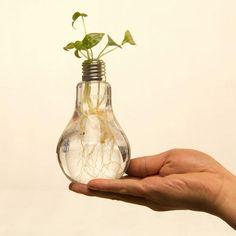 Vaso de lâmpada. :3