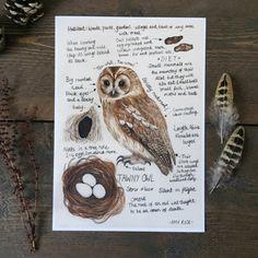 Waldkauz Natur Tagebuch A4 Giclee print - Eulen Natur Zeitschrift Vögel