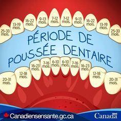 Saviez-vous que la première série de dents commence à se former pendant la grossesse alors que bébé est encore dans le ventre maternel?