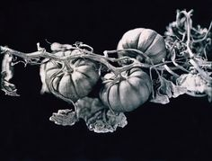 Image result for black and white photography fruit