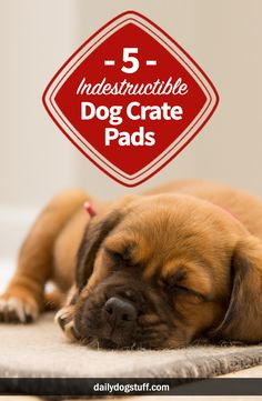 5 Best Indestructible Dog Crate Pads & Beds for Heavy Chewers via. Informations About 5 Best I Kennel Training A Puppy, Training Your Dog, Training Tips, Crate Training, Training Schedule, Building A Dog Kennel, Dog Crate Pads, Indestructable Dog Bed, Coconut Oil For Dogs