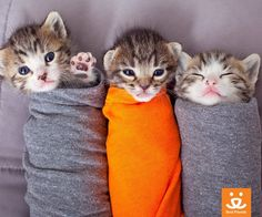 ResQte Of The Week: Purritos To GO, Please