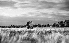 Beautiful golden evening light in a golden cornfield in black and white ;)