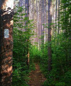 Appalachian Trail through New-England Source: Appalachian.trail@Instagram