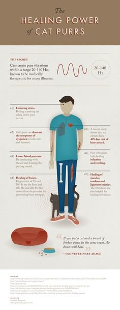 Check out this infographic, The Healing Power of Cat Purrs. Who knew our kitties had superpowers like this? Even if you don't own a cat, you can become a humane society volunteer and reap the purr benefits by socializing our shelter felines.