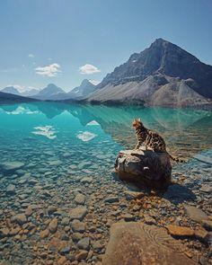 A perfect meowntain lake 🏔💦