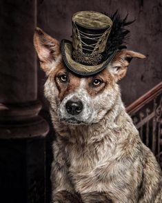 Vintage Dog, Vintage Circus, Boston Terrier Names, Aussie Dogs, Australian Cattle Dog, Dog Quotes, Dog Portraits, Pitbull Terrier, Dog Art