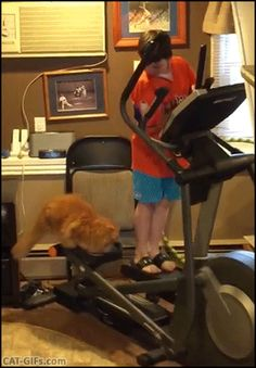 Cool Cat enjoying fitness time with kid on elliptical exercise machine