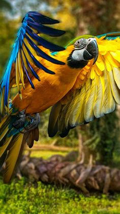 The Blue-and-gold macaw is named for its beautiful blue body with a dark lemon-yellow chest. It is also known as the blue-and-yellow macaw. Tropical Birds, Exotic Birds, Colorful Birds, Pretty Birds, Beautiful Birds, Animals Beautiful, Baby Monkey Pet, Blue Gold Macaw, Animals And Pets