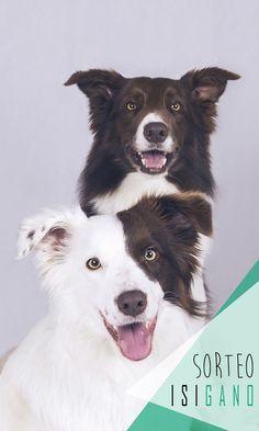 Snappy Dogs quiere premiaros con una sesión de fotografía para vuestro perro* valorada en 50€, el modelo de cuatro patas lo pones tú! #sorteo #sorteos #gratis #sorteogratis #sorteosgratis #sorteomadrid #sorteosmadrid #Madrid #suerte #luck #goodluck #premio #free #fotografía #mascotas