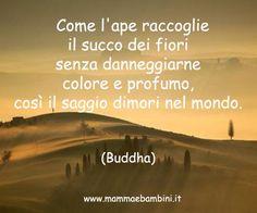 buddha citazioni italiane on pinterest - Cerca con Google
