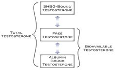 SHBG and Testosterone