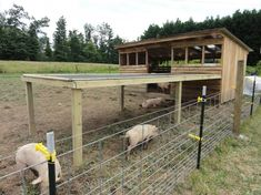 pig pens and shelters Pig Shelter, Farm Layout, Ranch Farm, Farm Plans, Pot Belly Pigs, Pig Pen, Teacup Pigs, Homestead Farm, Farm Projects